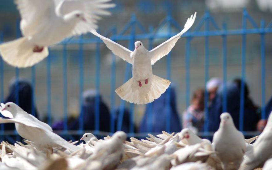 اشراف صلح1
